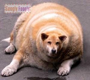 как не сорваться при процессе сброса лишнего веса
